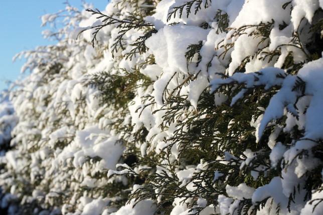 vinter snö
