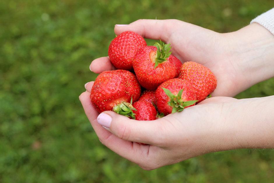jordgubbarihand